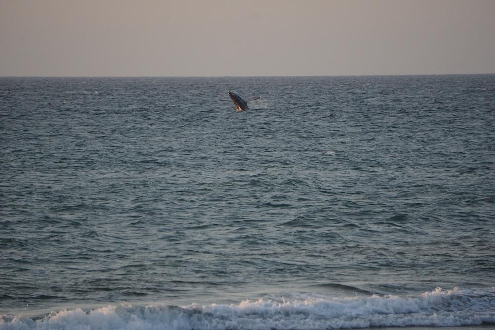 Wale beobachten in Nordperu